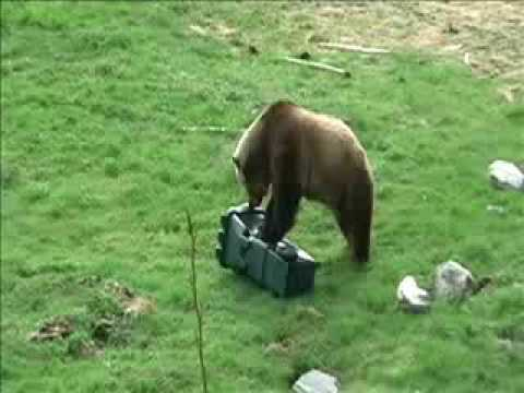 How To Bear Proof Your Property Bear Deterrents Houselogic