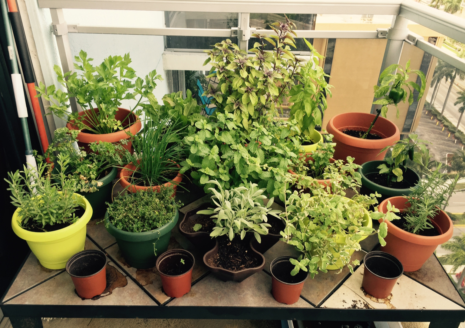 Potted herb plants on a tiled balcony
