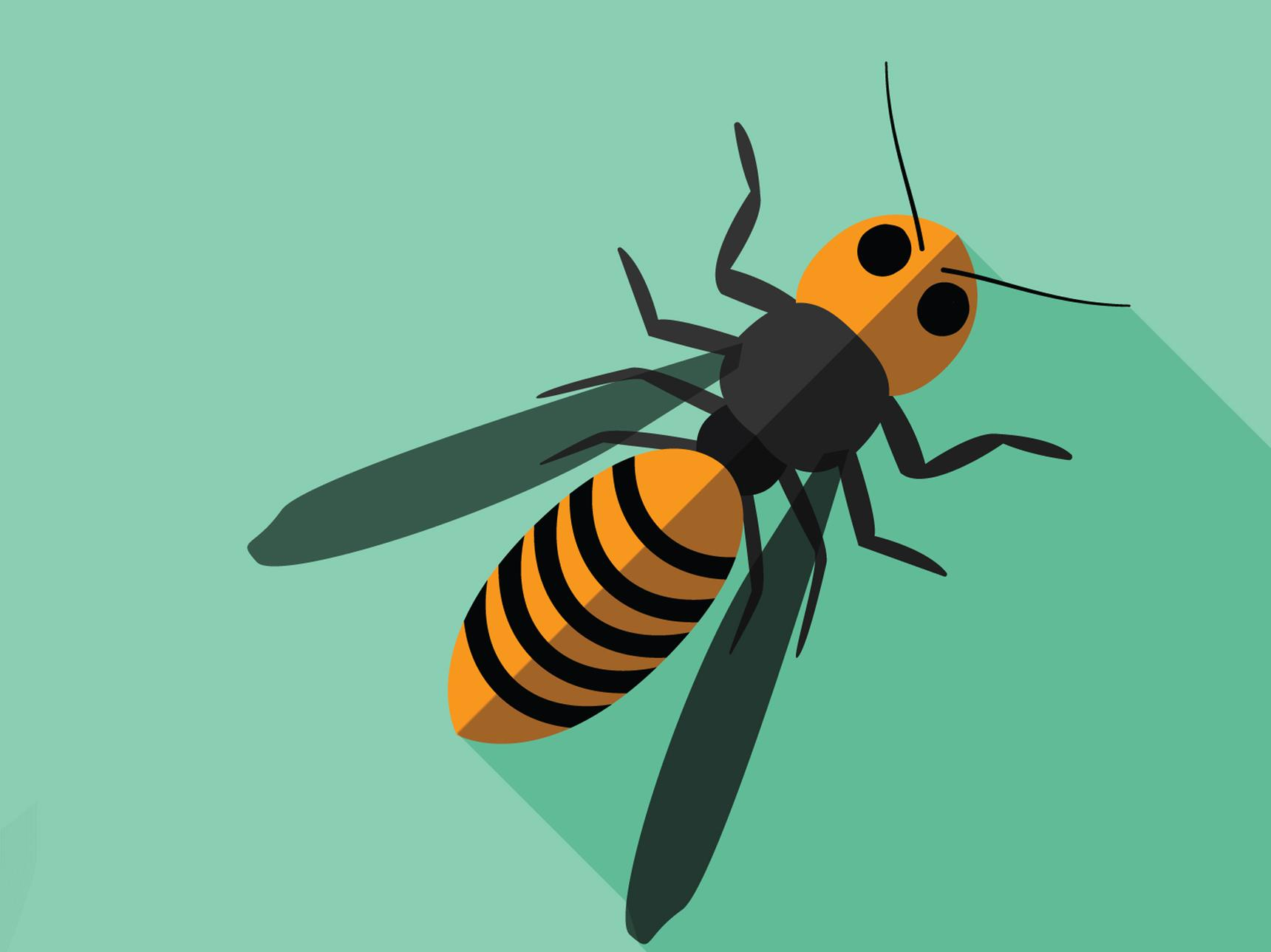 Illustration of a hornet
